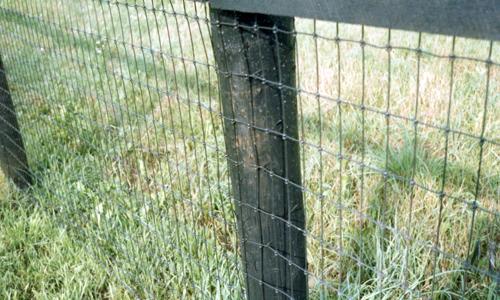 non_climb_mesh_wire-lg
